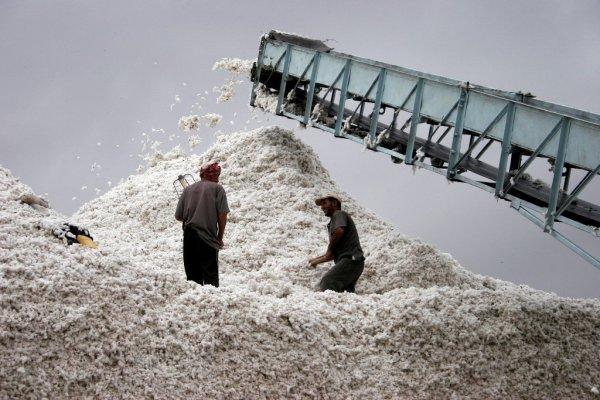 Таджикские фермеры рассказали, почему им невыгодно растить хлопок